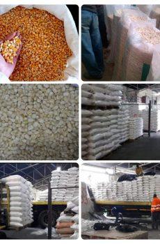 Maize/ Corn